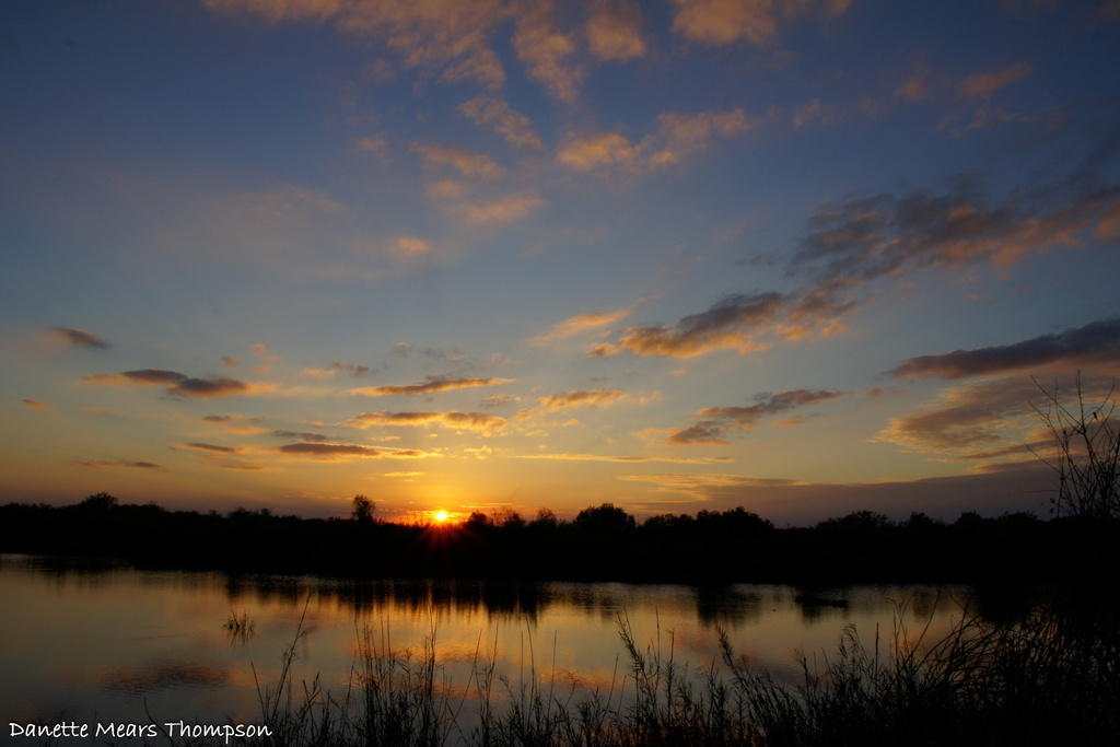 Blue skies over the Everglades by danette