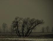 29th Jan 2013 - Dark Foggy Afternoon