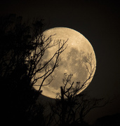 28th Jan 2013 - moonrising