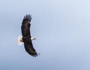 29th Jan 2013 - Spread Eagle