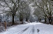 29th Jan 2013 - the drift road