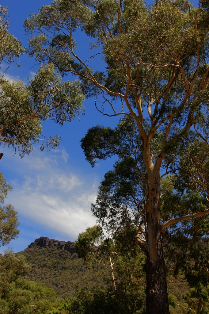 The Grampians by pictureme