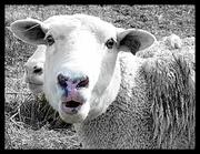 31st Jan 2013 - The Flock Gossip