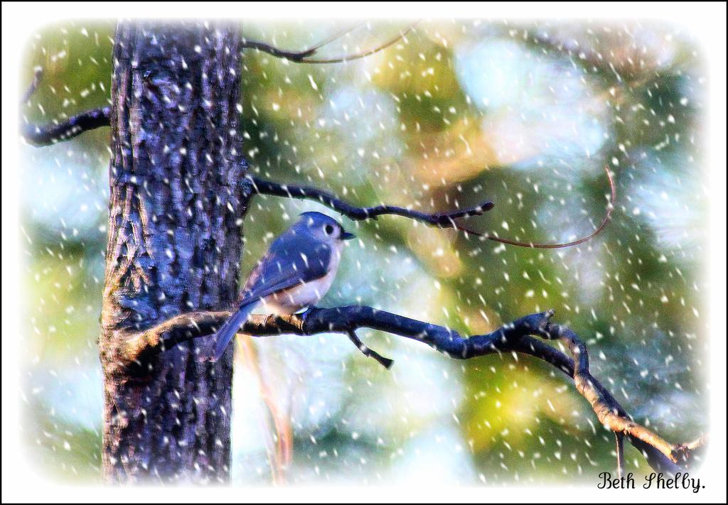 Winter by vernabeth