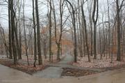 31st Jan 2013 - Wintry crossroads