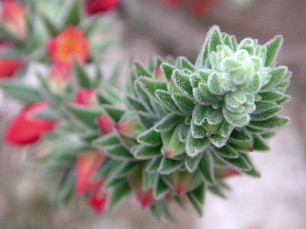 Flowers and Fuzz by pasadenarose