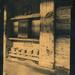cyanotype by ingrid2101