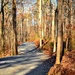 Wooded path by soboy5