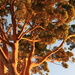 Gumtree by pictureme