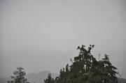 24th Jul 2010 - Fog and rain