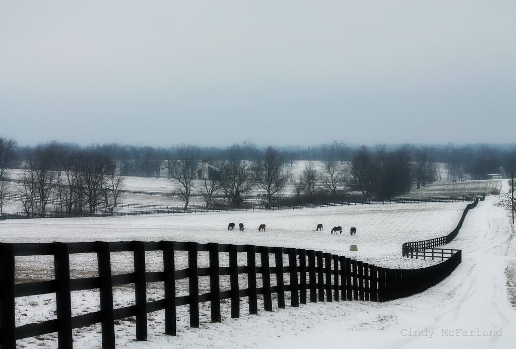 Snowy Lane by cindymc