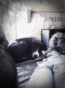 7th Feb 2013 - iWatch Dog