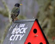 7th Feb 2013 - Morning visitor
