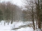 9th Feb 2013 - Winter