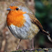 We shall have snow, and what will the robin do then, poor thing? by shepherdman