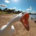Duck, duck... by orangecrush