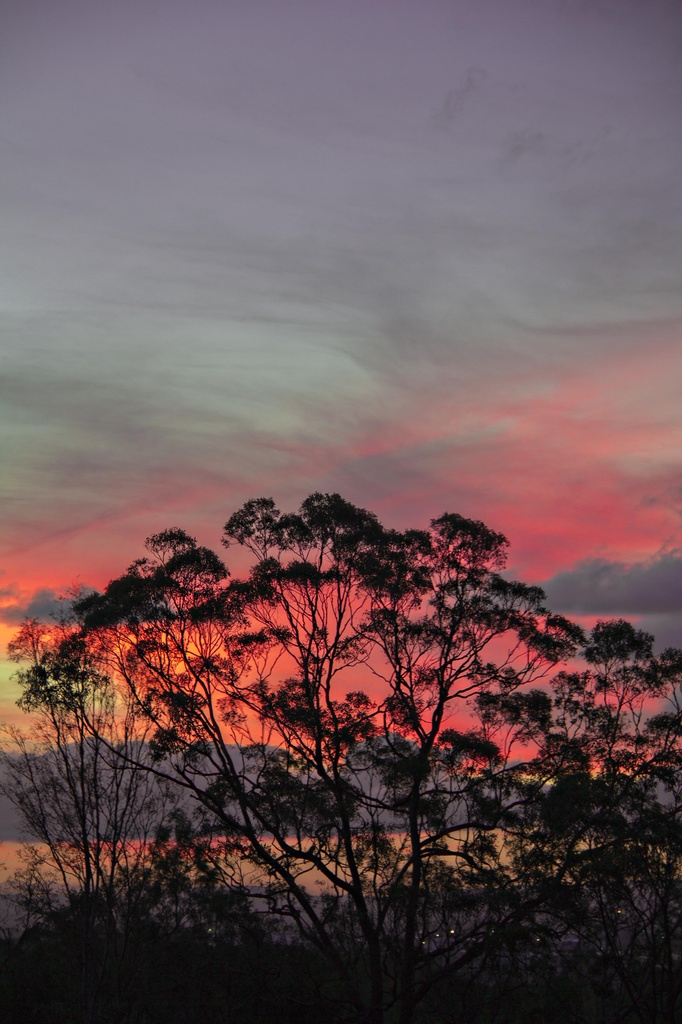 A touch of pink by corymbia