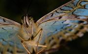 13th Feb 2013 - butterfly