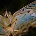 butterfly  by jantan