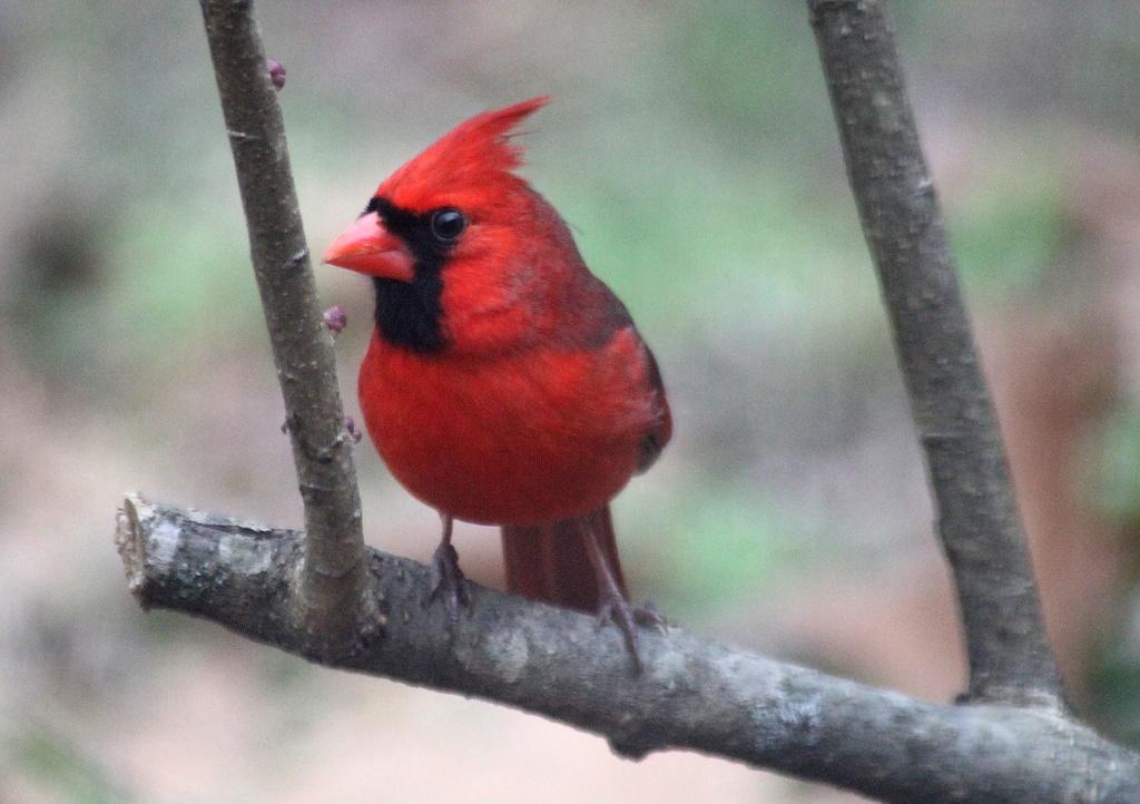 Pretty in Red by vernabeth