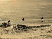 13th Feb 2013 - Get your ducks in  row.