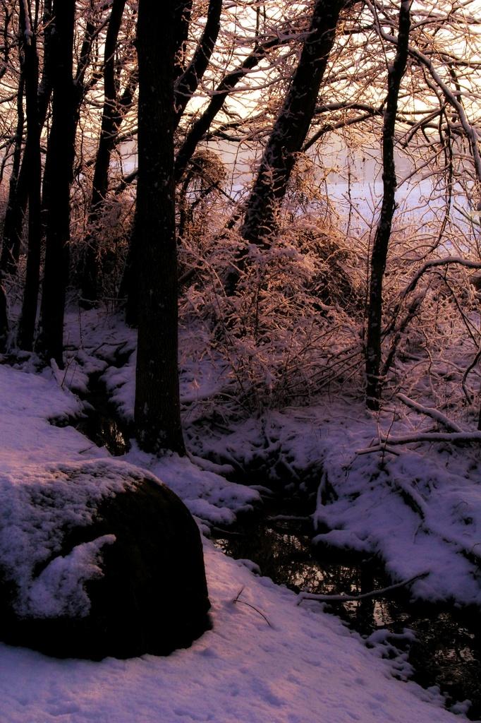 Morning Snow by digitalrn
