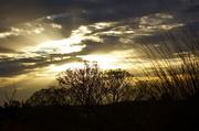 16th Feb 2013 - Morning glory