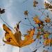 Is it Fall, or is it Spring? by pasadenarose