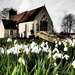 Snowdrops by andycoleborn
