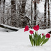 Bring on spring by egad