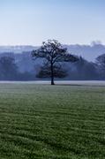 19th Feb 2013 - Day 50 - Arboreal Focus