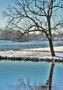 19th Feb 2013 - Winter Blues