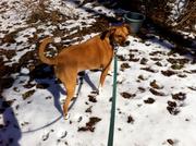 9th Feb 2013 - Snowpup