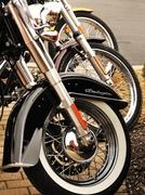 20th Feb 2013 - Harley Feelin' It