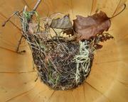 21st Feb 2013 - Bird's Nest