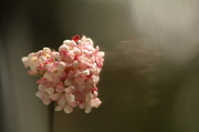 21st Feb 2013 - Well hello, pretty flower.....