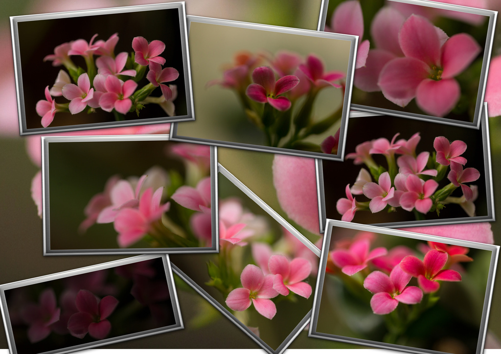 Pink Collage by cdonohoue
