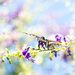 Flight of the butterfly by bella_ss