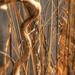 Sticks and Twigs by lynne5477
