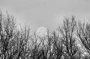 24th Feb 2013 - Grasping at the moon