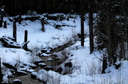 24th Feb 2013 - Mt Rainier - stream