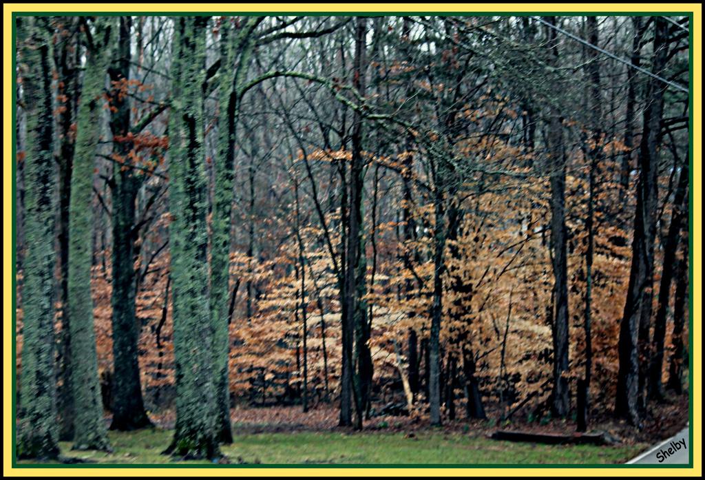 Woods by vernabeth