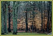 25th Jan 2013 - Woods