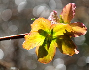 25th Feb 2013 - Boken, shadows, raindrops and oh yes - a dead flower...