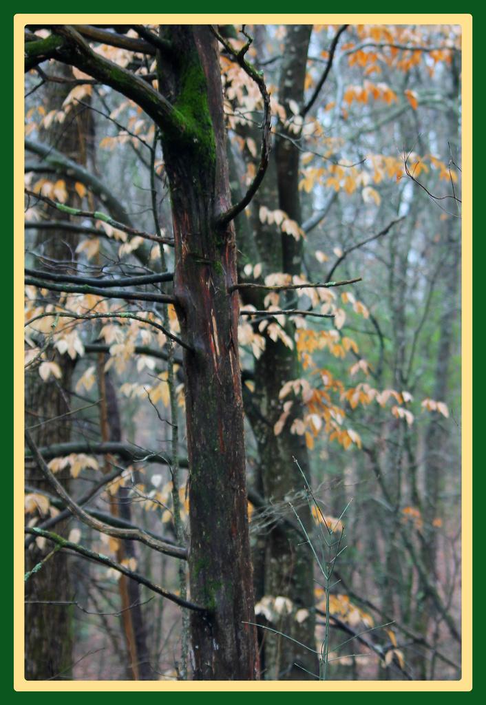 Trees by vernabeth