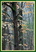 26th Jan 2013 - Trees