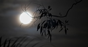 27th Feb 2013 - Moonlight ~ Day seeks respite in the arms of twilight