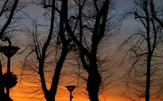 27th Feb 2013 - Sunset and lampposts