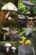28th Feb 2013 - Fungi