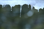 27th Feb 2013 - Icicles